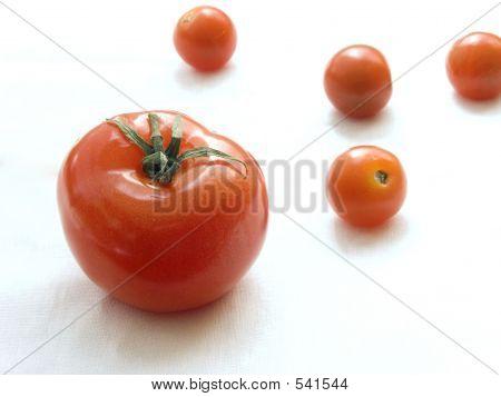 Fresh Tomatoes Ii