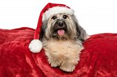 Cute Bichon Havanese dog in a Christmas - Santa hat is lying on a red velvet blanket. Isolated on a white background poster
