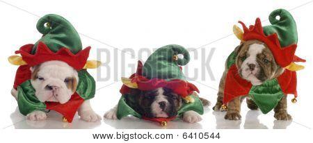 santa's helpers - three english bulldog puppies dressed up as elves poster
