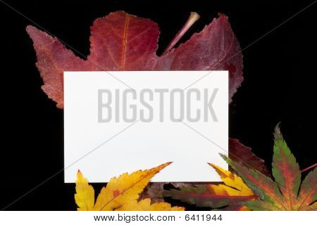 Huge Maple Leaf And Card