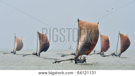 Traditional fishing boats under sail, Negombo, Sri Lanka poster