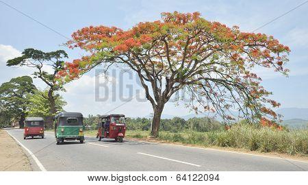 Tuk-tuk's on open country road in Sri Lanka