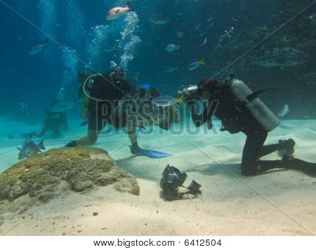 Feeding Giant Potato Cod (epinephelus Tukula) Great Barrier Reef