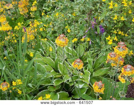 Waterside Plants