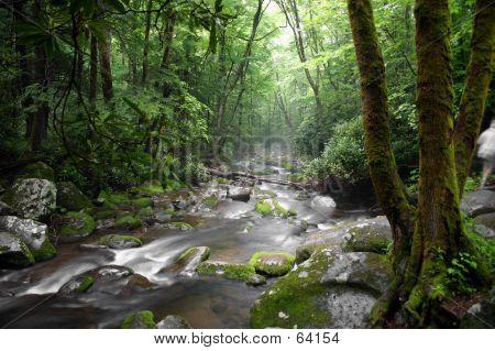 Misty Mountain Stream