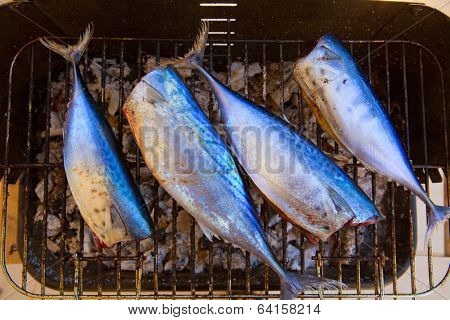Bar-b-cue tuna fish barbecue with bonito sarda and little tunny