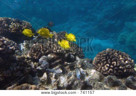 Tropical Underwater scene, Hawaii poster