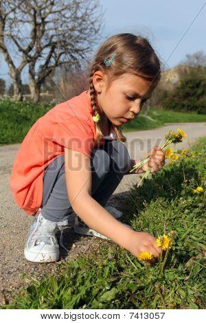 Girl picking daisies