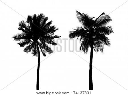 Silhouette of palms isolated on white background