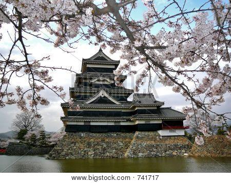 Matsumoto Schloss mit Kirschblüten