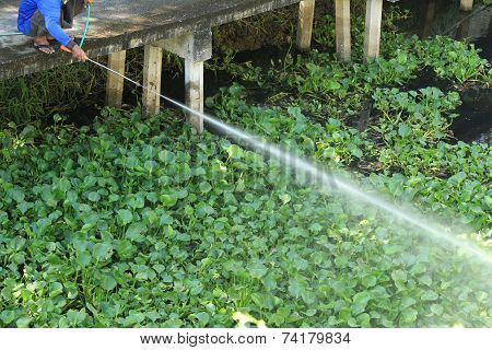 Man Spraying Herbicide