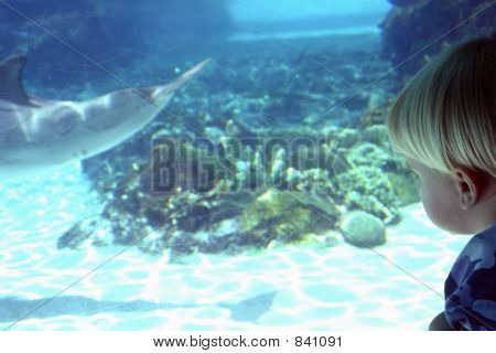 Blonde boy looking at dolphin at zoo