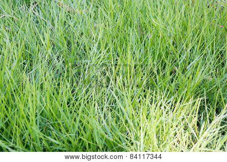 Greensward Home Page