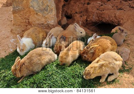 Rabbits Feeding On Grass And Rabbit Hole