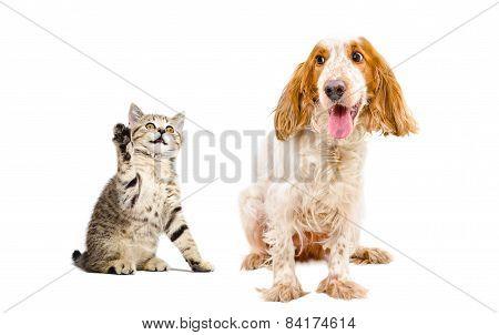 Kitten attacks the dog