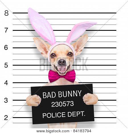 Easter Mugshot Dog