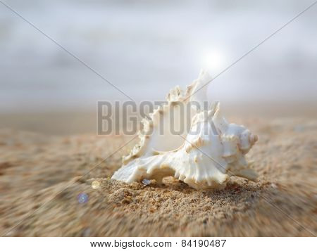 Seashell On Sandy Beach With Lens Flare Effect.