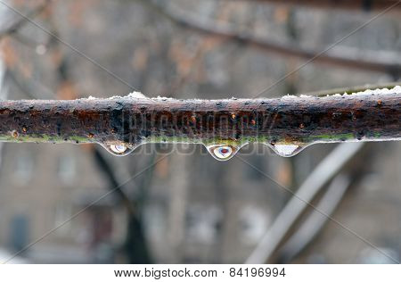 Formation Of Icing On A Tree Branch