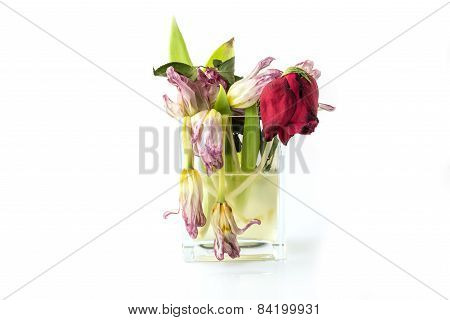 A Vase Full Of Withered And Dead Flowers