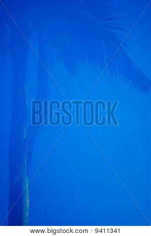 Palm Tree Border