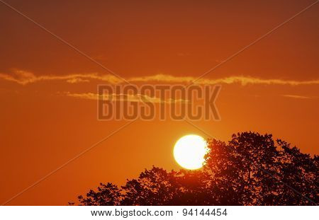 Landscape With Sun Behind Tree
