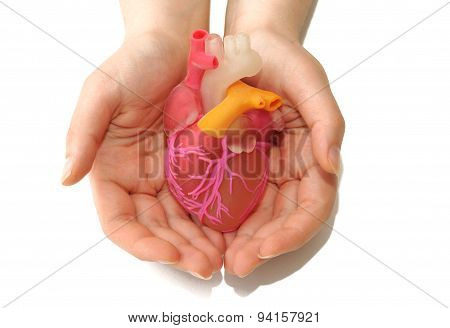 Two Female Hands Holding A 3D Printed Human Heart