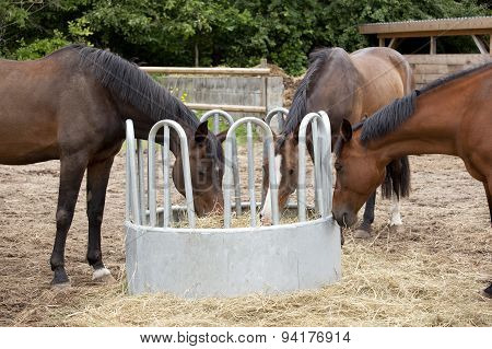Three Horses Eat Hay
