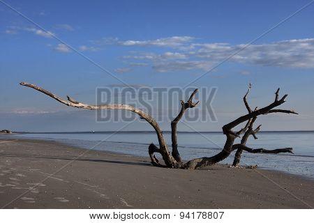 Natural Beach Sculpture