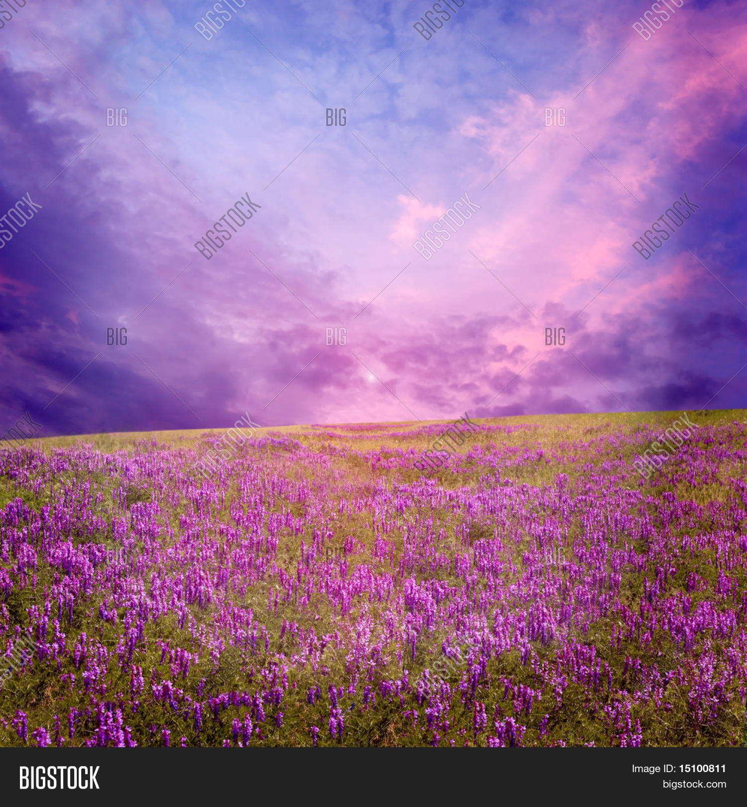 Pink Sunset Flower Image Photo Free Trial Bigstock