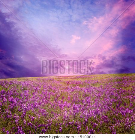 pink sunset is in the flower field