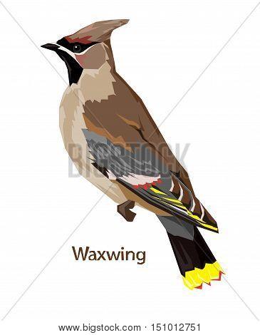 bird vector, vector illustration isolated bird. bird flying, bird Waxwing.