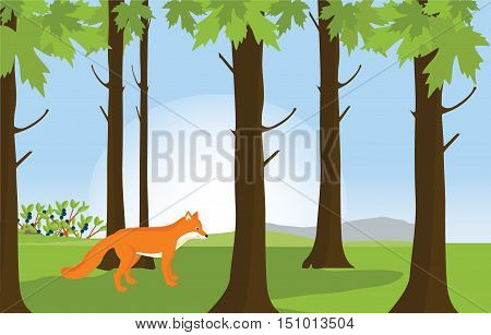 Red Fox In Forest Landscape
