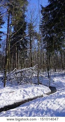 Sunny day in winter; bare deciduous forest and a little creek, snow pack, light and shade,  blue sky