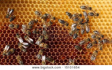 poster of honey comb and a bee working