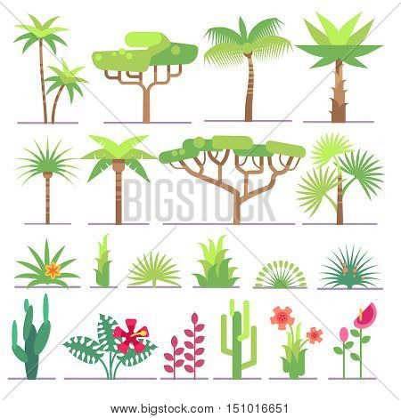 Different types of tropical plants, trees, flowers flat vector collection. Flower and exotic palm illustration