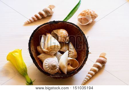 Coconut shell with coch shells and tropical flower on light wood background for spa concept.
