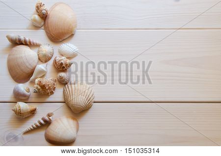 Close up of differents seashells on wooden background with copy space.Cocept for summer time or vacation.