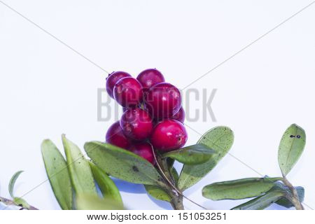 some lingonberries against an isolating white background