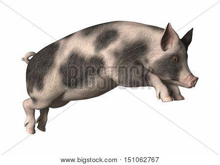 3D Rendering Pig On White