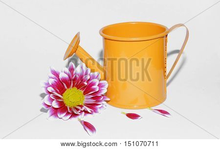 flower bud and watering can on a white background