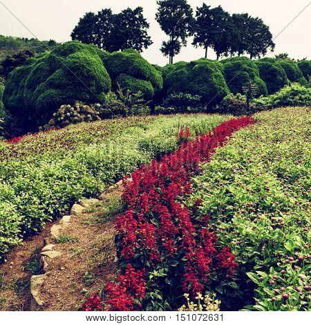 Fukuoka - Colorful flower field at Nokonoshima Island Park. July 2016