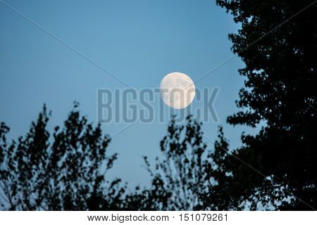 The full moon framed by trees in the early evening sky.