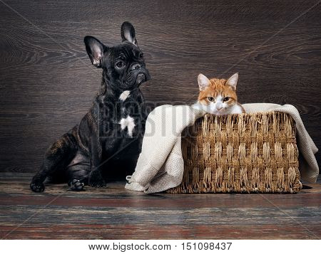 Lovely cat and dog. The cat in the box the dog sits beside him on the floor in a wooden wall