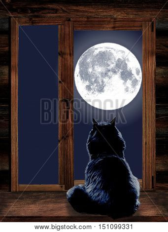 Cat sit by the wooden windowsill in moonlight and looking at full moon
