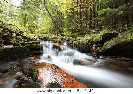 Brook in the autumn forest. October, Poland