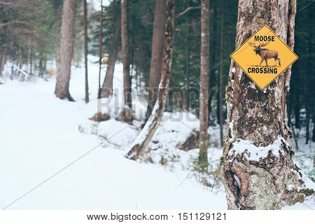 Moose Crossing Sign. Snow Road in the winter
