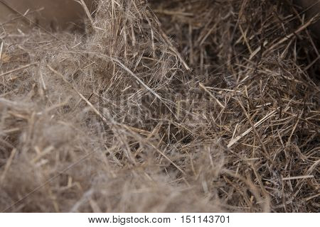 A bundle of raw flax fibers used to make linen