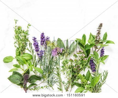 Fresh herbs on marble stone background. Basil rosemary sage thyme mint dill savory lavender Food background