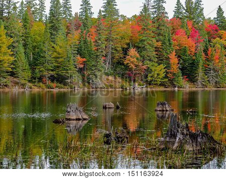 Algonquin Provincial Park Autumn Fall Colors Water Reflection