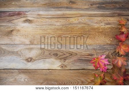 Thanksgiving concept with fall maple leaves on wooden background. Thanksgiving background with seasonal vegetables and fruits. Fall background. Copy space